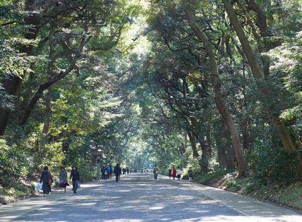 forest_meiji_shrine2